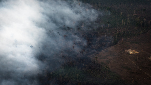 Egyetlen év alatt 43 százalékkal nőtt az amazonasi erdőirtás mértéke
