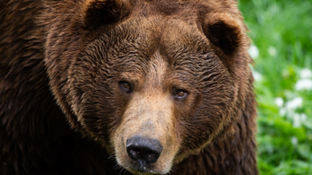 Tagad a herceg, aki kilőtte a hatalmas székelyföldi barna medvét
