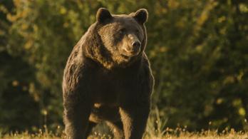 A polgármester szerint nem Európa legnagyobb barna medvéjét lőtte ki Székelyföldön a liechtensteini herceg