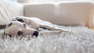 Miért ennyire nyugodt a kutyád? Szerencséd van, vagy beteg?