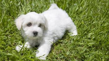 Kiskutyákat mentett a NAV a csempészek karmaiból