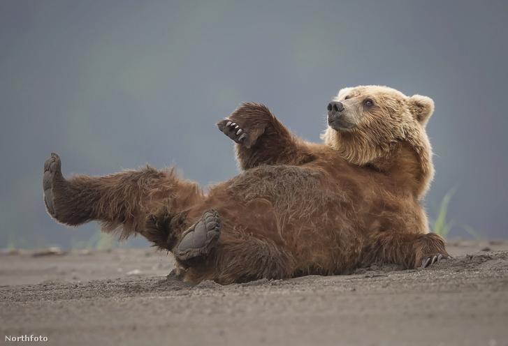 tk3s sn chilled relaxing bear 1
