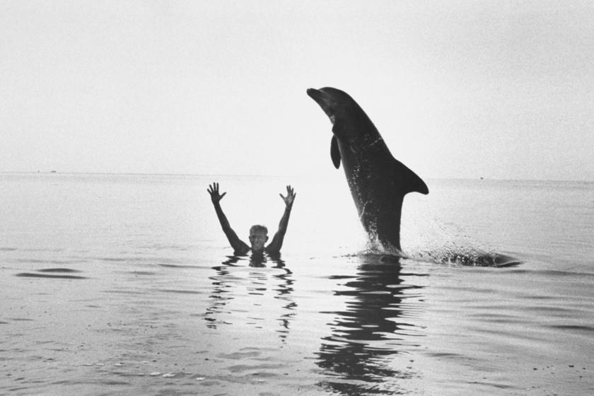 A Delfinember, aki tenger mélyén érezte magát otthon: Jacques Mayol elsőként érte el egy levegővel a 100 métert