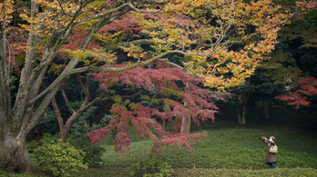 Tudta ön, hogy fák valójában nincsenek?