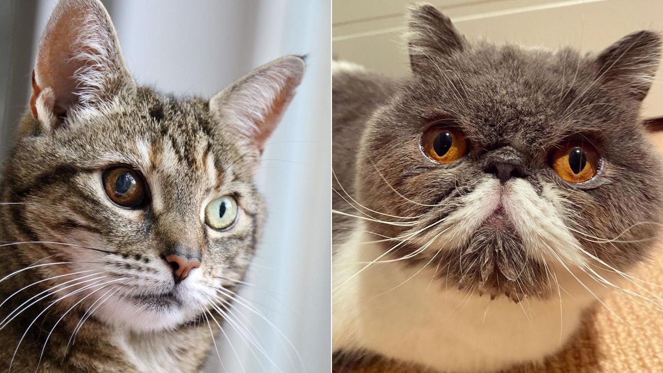 különleges-macskák-borító