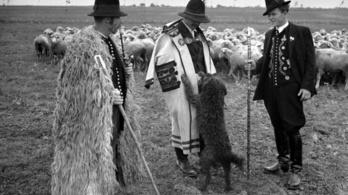 Együtt stresszelnek a pásztorkutyák a gazdájukkal