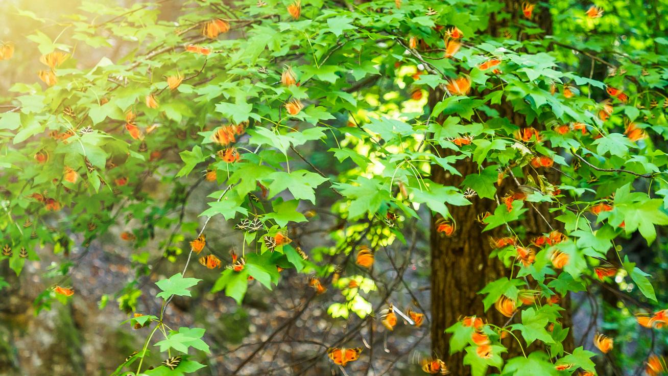 pillangők völgye görögország