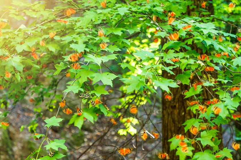 Igazi földi paradicsom rejtőzik Rodosz zöldellő erdejében: a Pillangók völgye a világ egyik legszebb helye