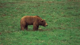 Nem védett területen lőtte ki a medvét a liechtensteini herceg