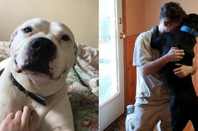 kutyák-szeretete-borító
