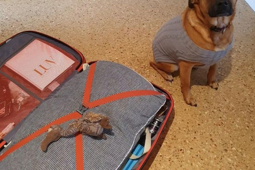 A gazdi utazásra készült, kutyája pedig belerakta a bőröndjébe a kedvenc játékát.