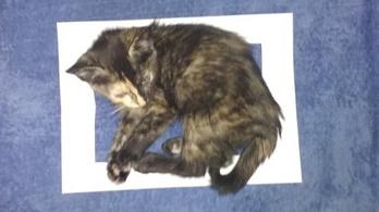 A doboz illúziójába is szeretnek beleülni a macskák