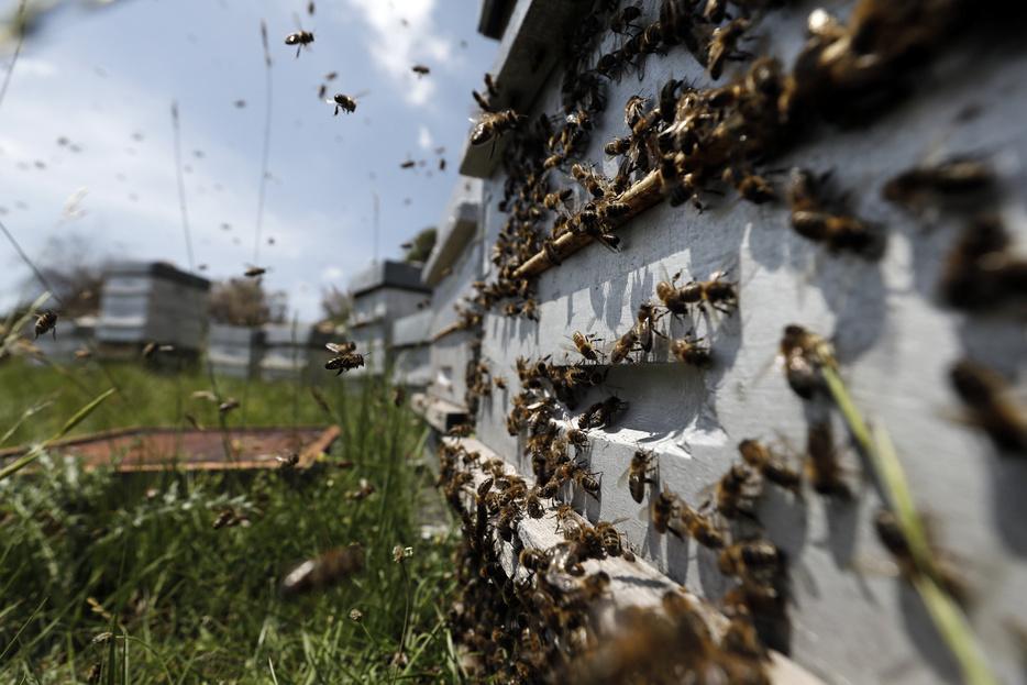 nyitott méh a helmintusokban