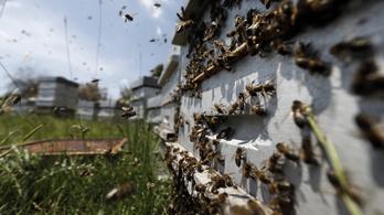 Nyolcmillió méh pusztult el az ukrán posta hibájából
