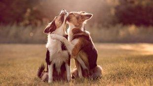 Az állatok érző lények: az Egyesült Királyságban törvénybe foglalták
