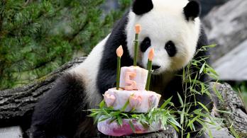 Betiltották a párttagok születésnapi bulijait egy kínai megyében
