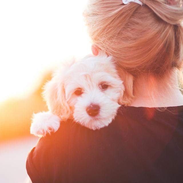 A kutyák szőrszálaiból ki tudják mutatni, mennyire stresszes az élete: ez okozza náluk a feszültséget