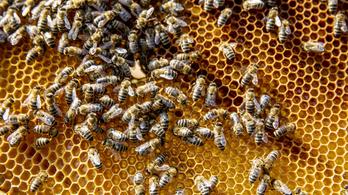 Mégsem pusztult el nyolcmillió méh Kárpátalján