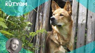Törvényen kívüli kutyatartók: Márton Attila különvélemény az en kutyam