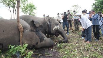 18 elefántot ölt meg a villám