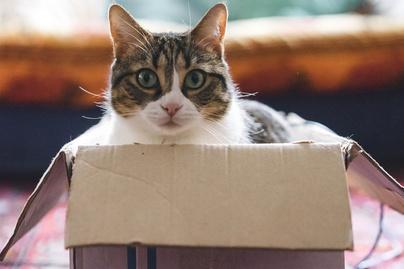 macska doboz cover