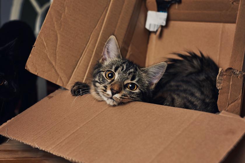 macska doboz 1