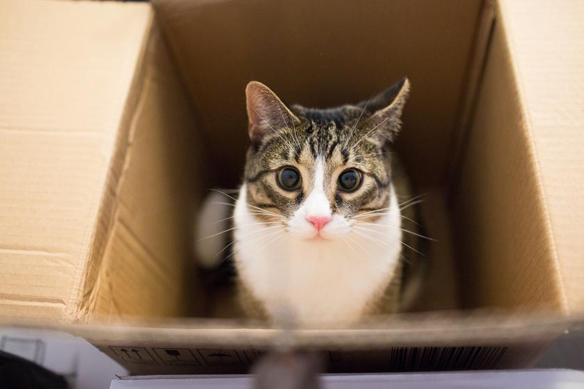 macska doboz 2
