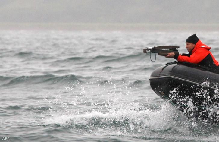 Vlagyimir Putyin orosz elnök tudományos célból vett bálnabőrmintát 2010-ben