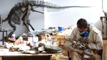 Tarajos dinoszauruszok eddig ismeretlen faját azonosították