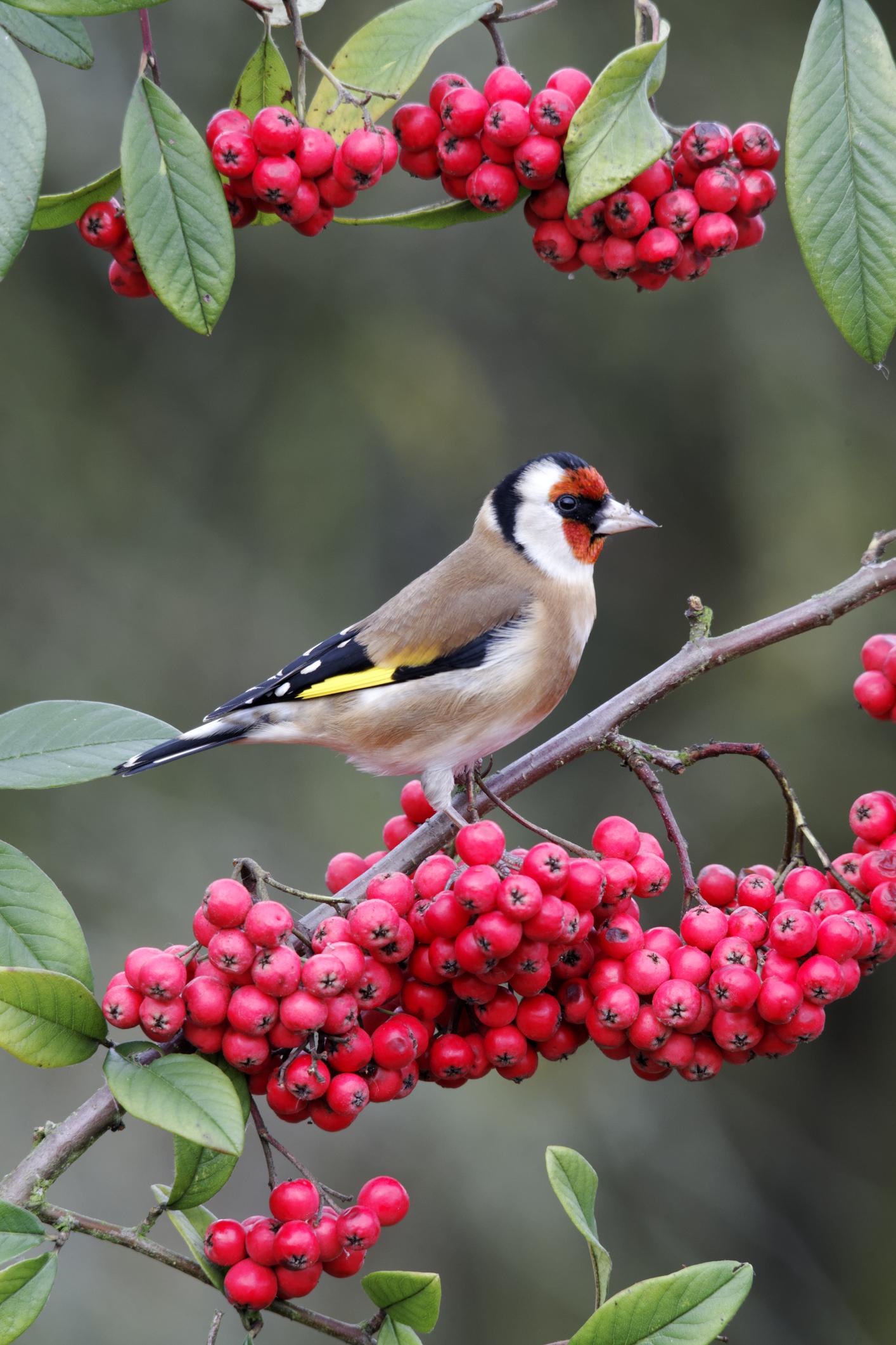 Milyen madár van a képen?