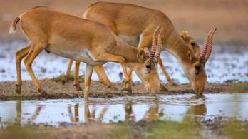 Antilopok százaival végzett villámcsapás