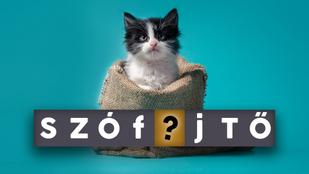 Szófejtő: Mi volt a zsákbamacska eredetileg? És miért pont macskát tettek a zsákba?