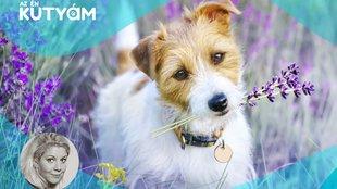 Így segítenek a gyógynövények kutyádon: a természet patikája