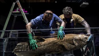 A dinoszauruszok előtti korból származó ritka halra bukkantak Madagaszkárnál
