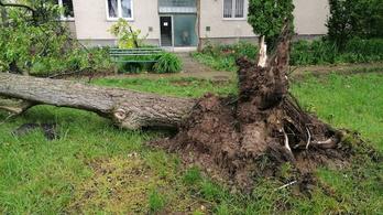 Tornádó pusztított Orosházán, fákat csavart ki, épületeket bontott meg