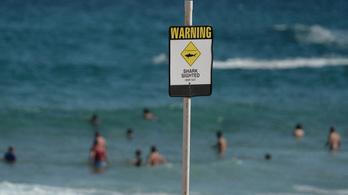 Kiment szörfözni az óceánon, 300 foggal jött a halál