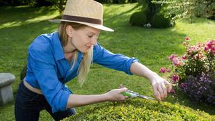 Így lehet szép dús sövényed a kertész szerint: fajták, ültetés és locsolás