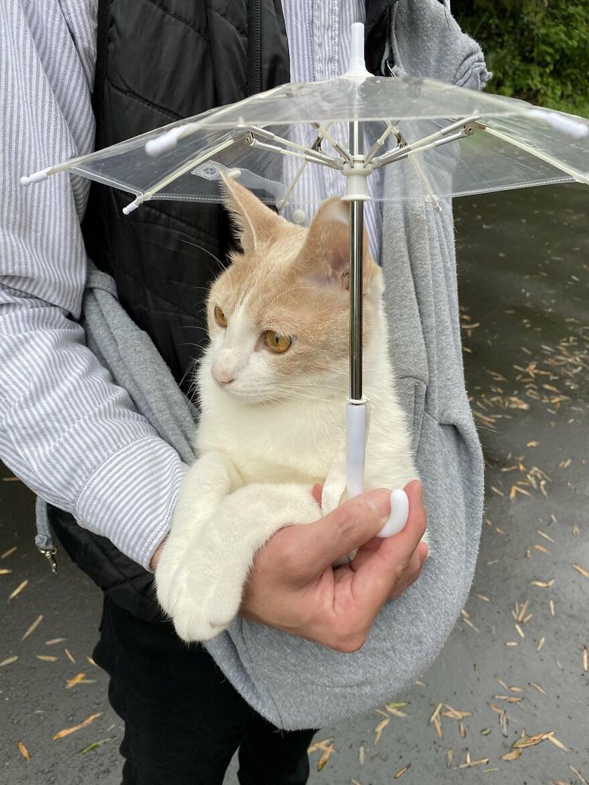 A Japánban élő férfi szeretett macskája imád vele időt tölteni a szabadban. Éppen ezért egyik nap gondolt egyet, és csináltatott kedvencéket egy saját kis ernyőt.