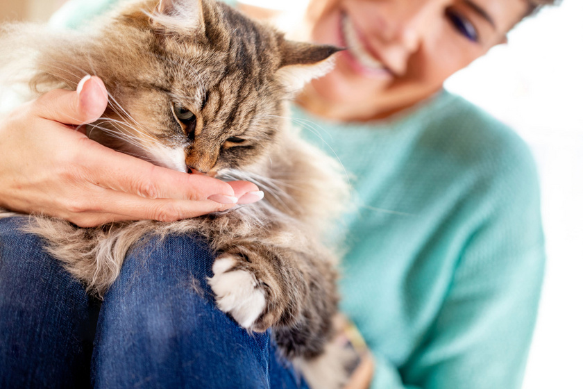 macska-nyalogat-kez