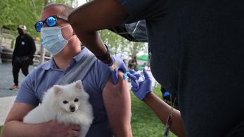 Ilyen még nem volt: kutyából származó koronavírusra bukkantak az emberben
