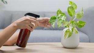 5 könnyen tartható szobanövény, amivel nem lőhetsz mellé
