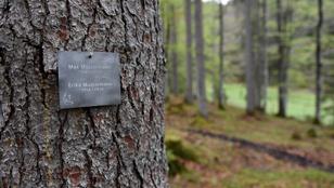 Szeretne erdővé válni, miután meghalt?