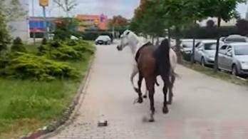 Begerjedt lovak randalíroztak a városközpontban