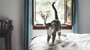 Miért rezgeti a macska a farkát? Talán valami baja van?