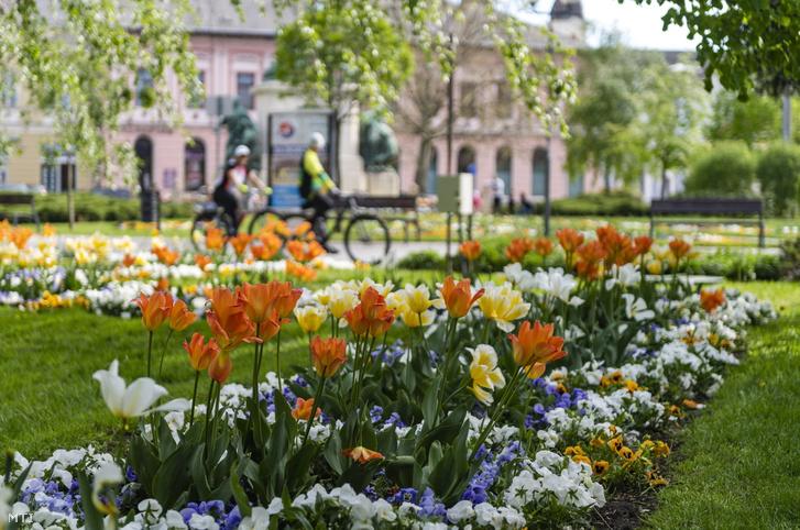 Tavaszi virágok a Hősök téren Nyíregyházán 2021. május 2-án.