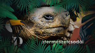 A világ legöregebb szárazföldi állata idén ünnepli 189. születésnapját