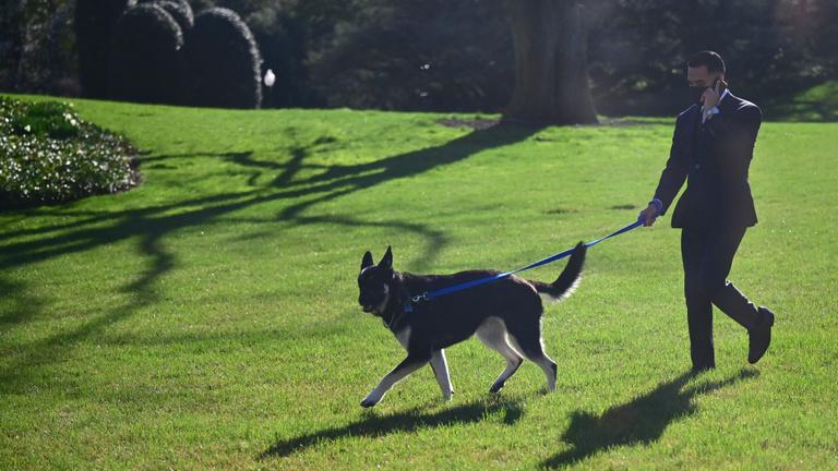 A morcos kutyák gyorsabban tanulnak