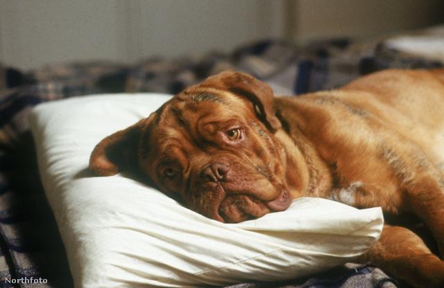 Kutya - képünk illusztráció