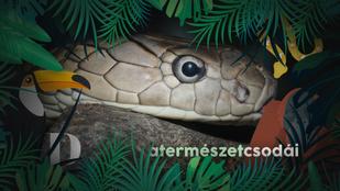 Ebbe a 6 kígyóba ne köss bele, ha kedves az életed