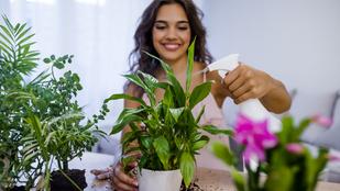 5 tipp, amivel párásabb közeget teremthetsz a szobanövényeidnek